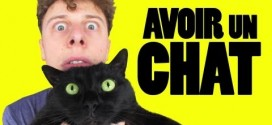 Norman, Avoir un chat
